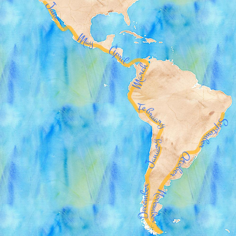 watercolor_SA_voyage_web